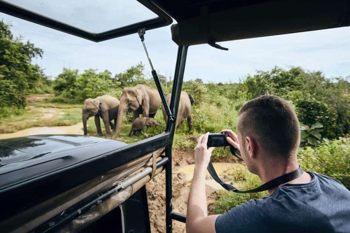 Taking Picture of Elephants